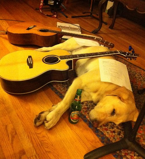 Esko dog asleep on floor with 2 guitar necks on top of him and beer bottle