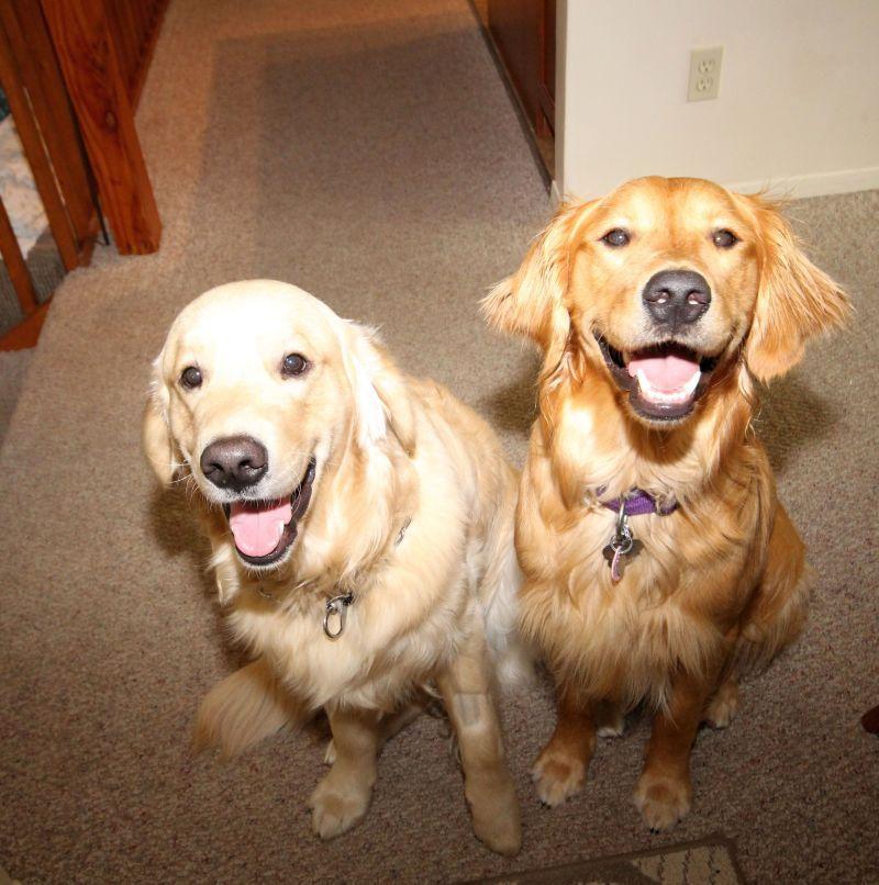 2 dogs Mocha and Murphy